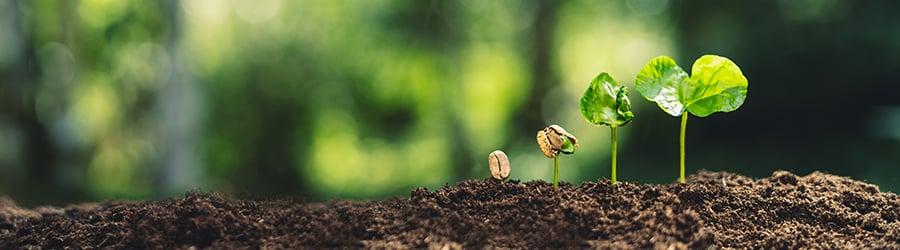 200511_seed-growth_900x250